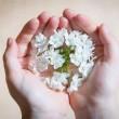 flower-1307578_640-s