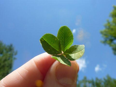 four-leaf-clover-19776_640-s